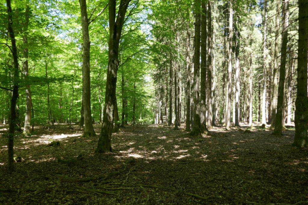 Laubwald grün, Nadelwald kahl
