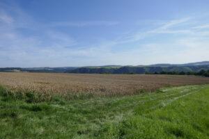 Aussicht bei St. Goar über das Rheintal, abgeerntete Felder und Wald