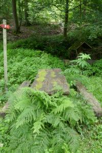 farnüberwucherte Rastbank im Wald