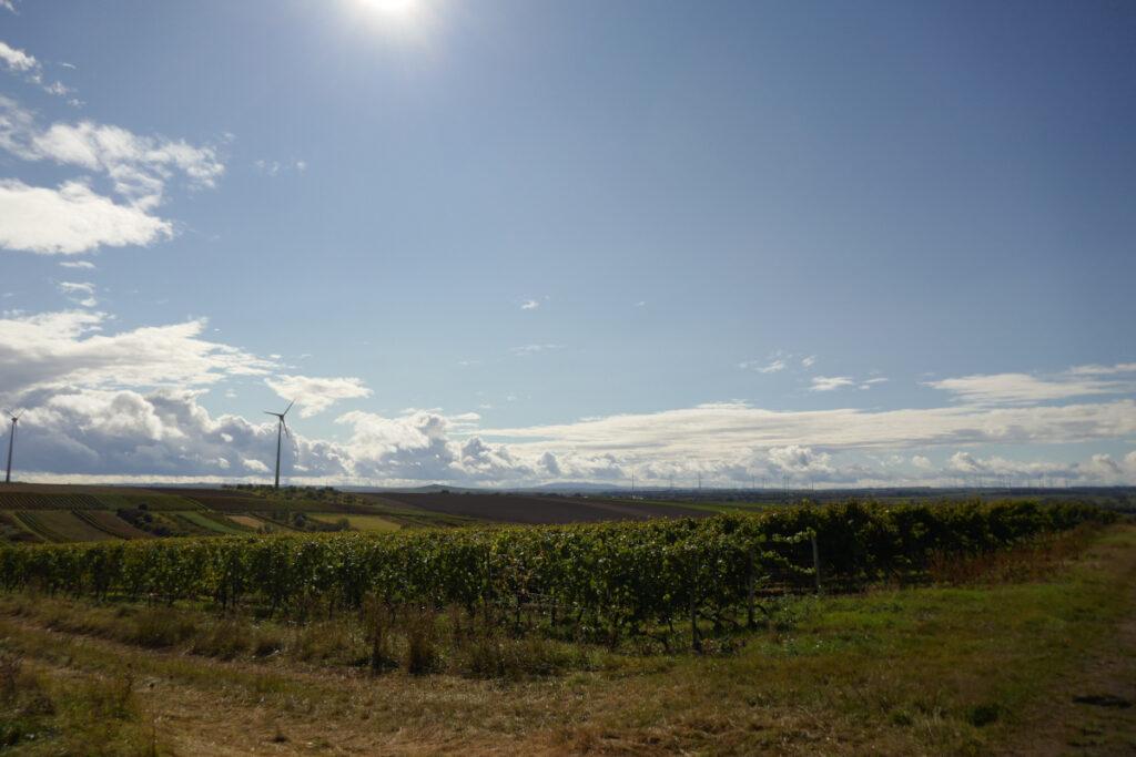 Sonnige Aussicht über Ackerland, im Hintergrund Windräder